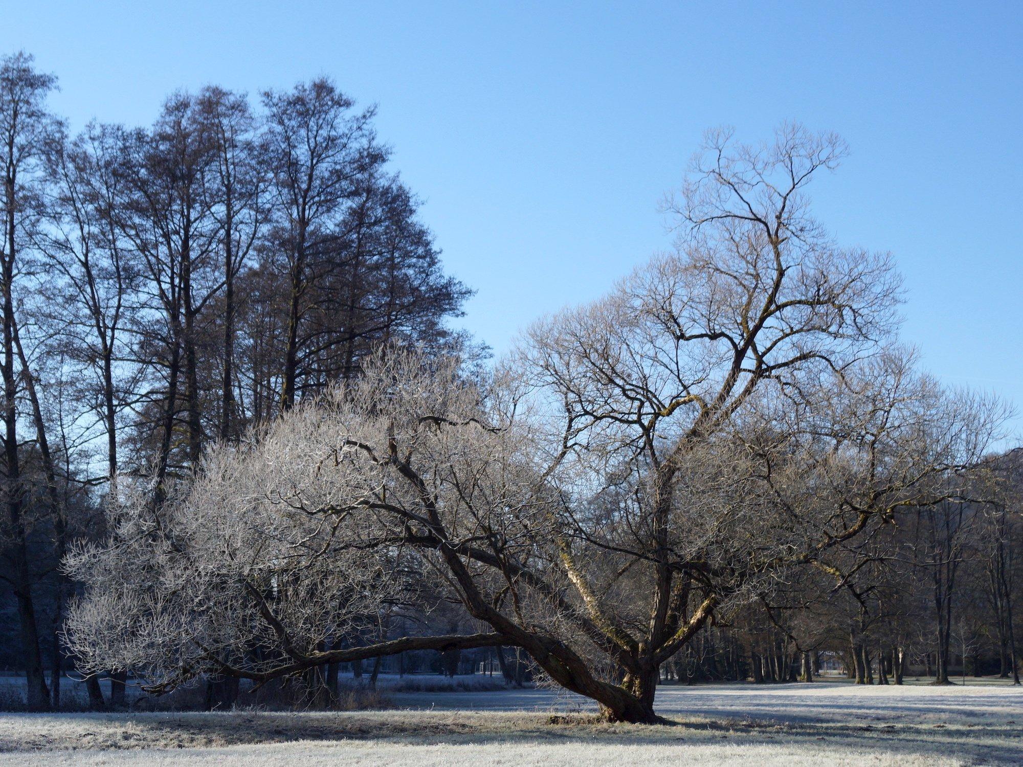 blogbeitrag-wildkraeuterreich